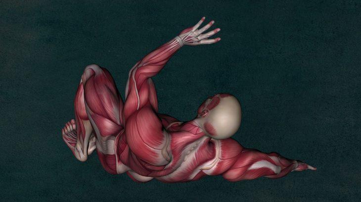 筋肉について知ろう 後編