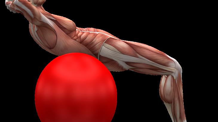 筋肉について知ろう 前編